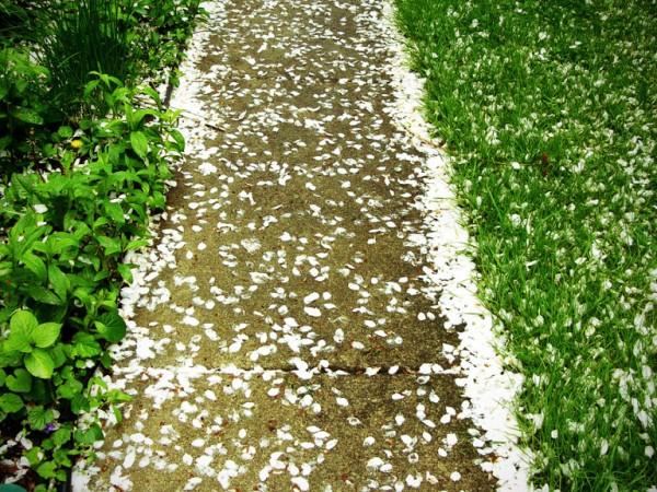 Memory Seeds the Garden